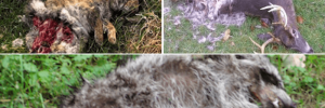 NJ animal carcass removal by pros in New Jersey