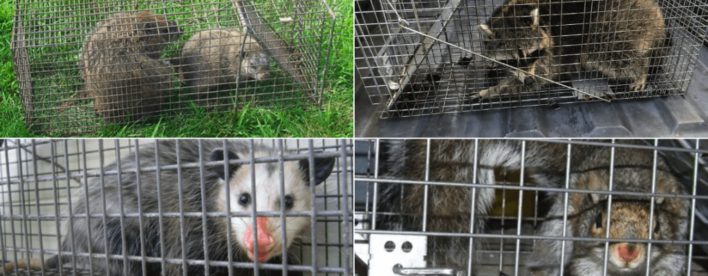 Central & South Jersey Wildlife Removal services in NJ