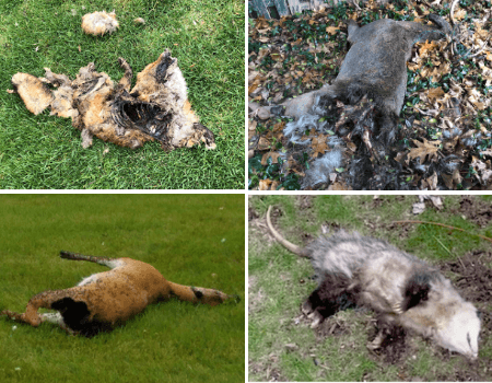 dead animal removal nj - dead animal deer carcass removal service in new jersey